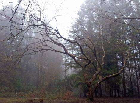 Byrne Tree