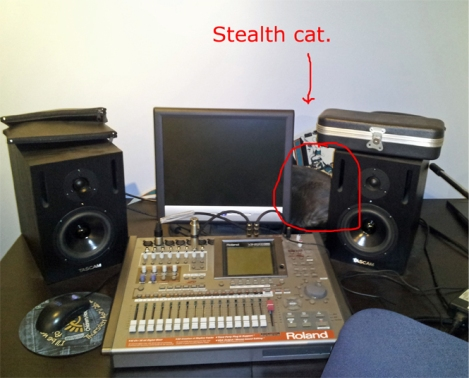 stealth cat